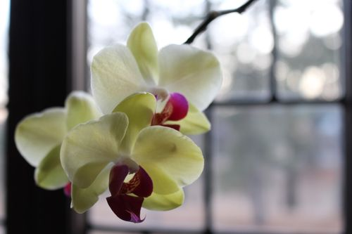 Orchid0002